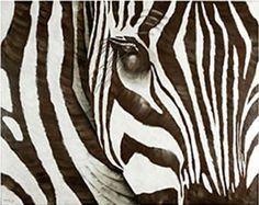 Zebraaaa stripes