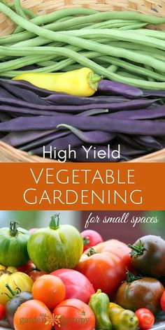 Small Space Gardening: Ideas and Tips to Grow Mountains of Vegetables These secrets to high-yield vegetable gardening will help you make the most out of a small space. Grow vegetables and fruit to feed your… Small Vegetable Gardens, Small Space Gardening, Small Garden Big Yield, Garden Spaces, Container Gardening Vegetables, Container Plants, Plant Containers, Vegetables Garden, Organic Vegetables