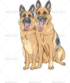 A #couple of #German #Shepherds - #She and #He