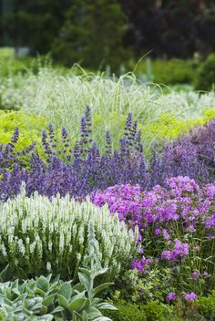 The combination of purple salvia and pink phlox creates a wildflower-like field that is amazing in large patches. This can cover a wide space and make your yard feel like an expansive field.