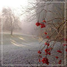 фото зимнего леса