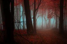 Autumn, forest, fog, trees, leaves, red, orange vektor