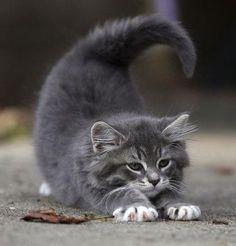 morning yoga stretch - downward kitty