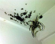 SpiderCeilingUpgrade!!!