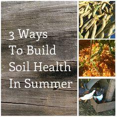 3 Ways to Build Soil Health In Summer #BackyardFarming, #BuildSoil, #SoilHealth, #SuburbanHomesteading, #Tips, #VegetableGrowing #Gardening