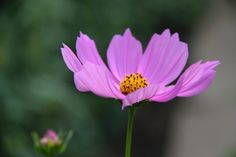 2012-07-14: flower