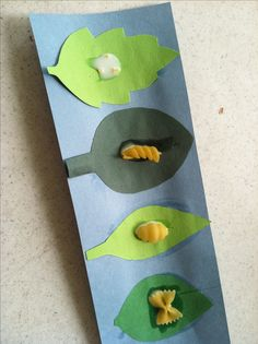 Butterfly Craft for butterfly week, use dry pasta shapes to show life cycle of butterfly!