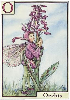 Illustration for the Orchis Fairy from Flower Fairies of the Alphabet. A boy fairy stands on a hill top facing right with his arms around an early purple orchis. Author / Illustrator Cicely Mary Barker