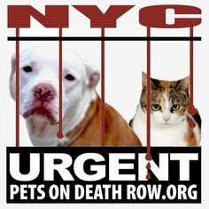 **NO LIST TONIGHT - TUESDAY DECEMBER 9th** Please share ALL the dogs and cats!!  Due to maintenance being performed on the at risk website, tonight's list has been cancelled. There will be no euthanasia tomorrow, Wednesday, December 10, 2014, unless deemed medically necessary for humane reasons by a licensed veterinarian.