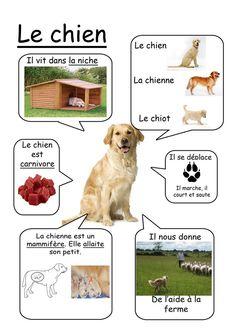 Chien - Animaux de la ferme www. animals silly animals animal mashups animal printables majestic animals animals and pets funny hilarious animal