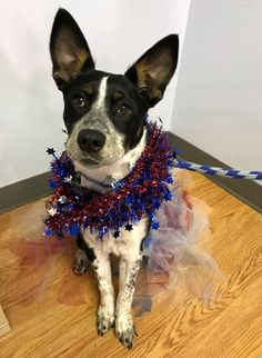In 1776, America declared independence. Today, these pets are hoping to start a new beginning of their own — and they can be adopted for just $17.76! Check out just a few of the wonderful animals you can bring home just in time for the July 4th holiday in this article from People!