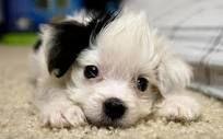 puppies - Google zoeken