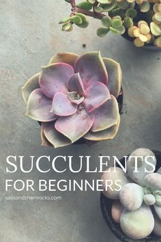 Firstly, I have to say succulents are simple adorable! They come in all shapes and sizes and are incredibly resilient little things. They have become so popular lately and are now appearing in bridal bouquets, home decor and can even be given as stunning homemade gifts! CALLING ALL PLANT MURDERERS! Do you love the idea of house plants or garden flower beds but have a bad case of the black thumb? Then succulents might be for you! What's better than living art that virtually takes care of…