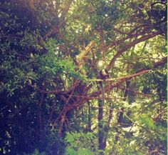 I love trees and monkeys... I love quiet places.