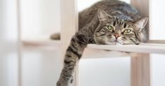 Cats are notorious for hiding any health issues they are experiencing, but sometimes out-of-character cat behaviors can be a sign of a sick cat. Pet Insurance Reviews, Cat Insurance, Health Insurance, Sick Cat Symptoms, Living With Cats, Tiny Living, Cat Species, Online Pet Store, Pisces