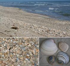 Big Shell Beach at Padre Island National Seashore. NPS photos.