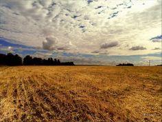 harvested Siberian field