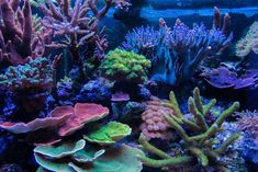 Getting beautifal corals begins with your light. Check out this LED setup that grows coral like crazy! Salt Water Fish, Salt And Water, Reef Tanks, Fish Tanks, Reef Aquascaping, Saltwater Aquarium Fish, Coral Tank, Underwater Creatures, Ocean Life
