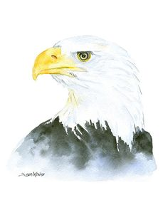 Eagle Watercolor Painting - 8 x 10 - Giclee Print - Reproduction - Bald Eagle - 8.5x11