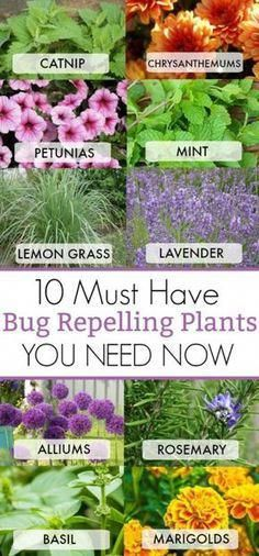 10 must have bug repelling plants to have this summer for your home. Nothing is worse than trying to sit outside and relax and having. garden landscaping 10 Must Have Bug Repelling Plants This Summer For Your Home Herb Garden, Lawn And Garden, Garden Fencing, Mint Garden, Flower Garden Plans, Box Garden, Garden Cafe, Garden Flags, Summer Garden