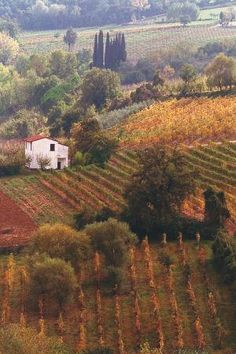 Autumn in Tuscany, Italy by VenusV