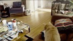 【Gifアニメ】ラジコンを追いかけていった猫が驚きの行動に・・・!!!