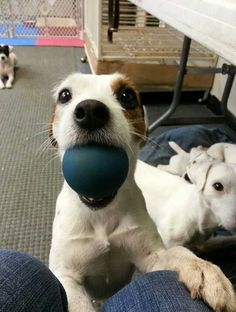 Play ball! for a second i thought it was my two dogs, looks just like them.