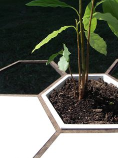 Honeycomb Gardening System   Urban Gardens   Unlimited Thinking For Limited Spaces   Urban Gardens