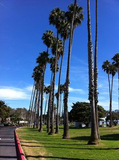 Palm trees line the paved driving and parking areas into Goleta Beach Park. (California Travel)