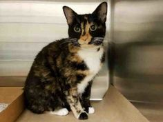Flora is safe!!  Invisible!  Not seen by public!  Help us Save NYC AC&C Shelter Cats