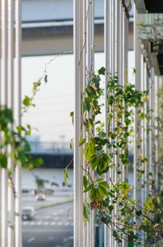 Here we have undertaken a green wall project for a newly opened multi-storey car park in the coastal area of Nagoya, which has seen an increase in. Parking Building, Parking Lot, Car Parking, Residential Architecture, Contemporary Architecture, Green Facade, Green Roofs, Shop Facade, Architect Drawing