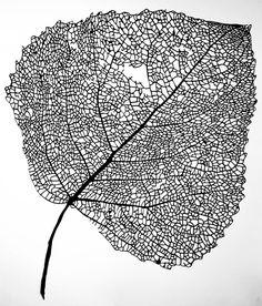 Stevi Benson. Birch Tree leaf