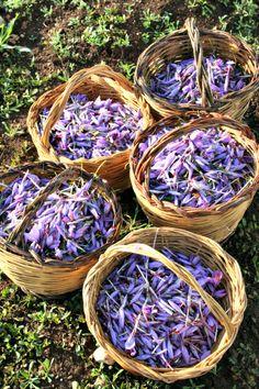 Saffron from Italy, Abruzzo