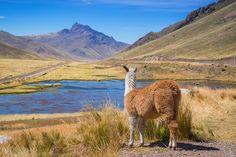Carnet de voyage au Pérou - Blog de voyages Voyage Way Blog Voyage, Bolivia, Camel, Scenery, Around The Worlds, Europe, Coups, Nature, Altitude