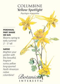 $1.89 Brighten your garden with this beautiful, fragrant, sunny yellow North American native!