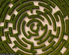 real maze - Google Search