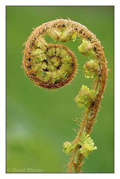 Some ferns demonstrate a fractal self-similarity structure.