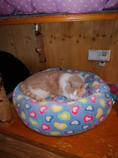 Bean Bag Chair, Cats, Animals, Furniture, Home Decor, Animales, Gatos, Decoration Home, Animaux