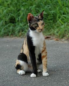 Check out the incredible markings on this kitty….