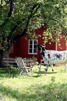 How charming. A cow strolls by and helps herself to some tree fruit. A lovely serene country backyard scene. Country Charm, Country Life, Country Girls, Country Living, Country Roads, Red Houses, Red Cottage, Country Scenes, Farms Living