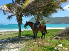 Horseback riding on the beach in St.Lucia