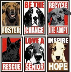 Be a foster parent and help a pet find their loving family!
