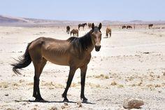 'Wild Horses of Namibia' by SeeOneSoul Namib Desert, National Geographic Photos, Your Shot, Wild Horses, Habitats, Amazing Photography, Africa, Animals, Animales