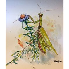 """Original watercolor painting, mantis on blue flower, 10""""x8 17041111 (£31) ❤ liked on Polyvore featuring home, home decor, wall art, watercolor wall art, blue home decor, unframed wall art, flower stem and blue flower painting"""
