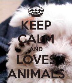 Keep calm and loves animals