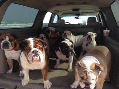 ❤ Follow this car - there can only be fun ahead! And lots and lots of lovies !! ❤