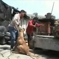 South Korea! World Says No Convention at a Dog Eating Nation!  ICCA-Please Terminate the South Korean Membership!