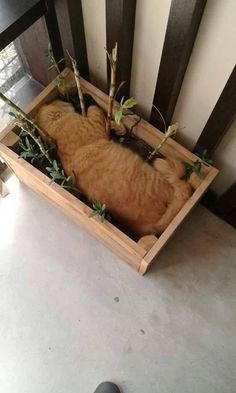 We have plenty of space but he loves to sleep here by LetsTravelNow cats kitten catsonweb cute adorable funny sleepy animals nature kitty cutie ca