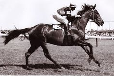 1954 Rising Fast - Melbourne Cup winner - Google Search