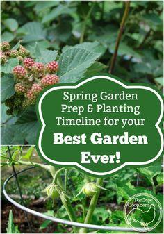 Spring Garden Prep, Planting Timeline for Your Best Garden Ever! - The Cape Coop